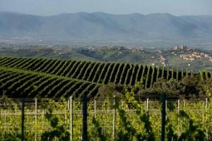 Agriturismo Val di Chiana - Paesaggi Toscani